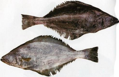 Краткий обзор промысловой обстановки донных рыб в Северо-Охотоморской подзоне Охотского моря
